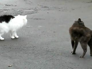 Разборка котов